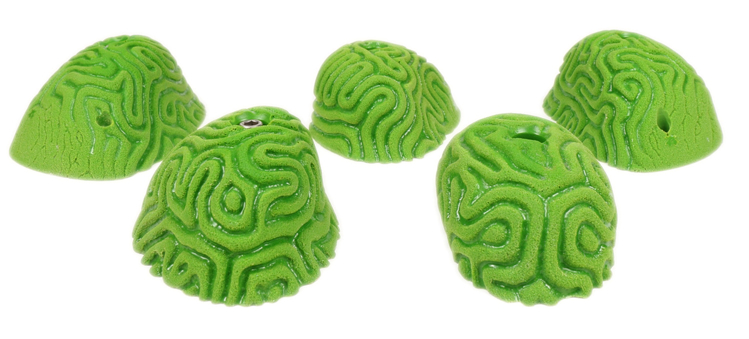 Picture of 5 XL Brain Coral Slopers #1