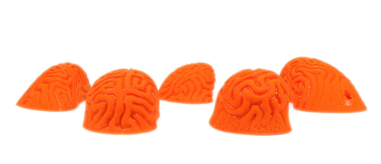 Picture of 5 Large Brain Coral Pinches #1